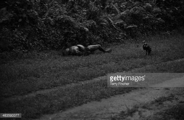 A dead body abandoned in a field, during the Nigerian conflict with Biafran forces, Nigeria, 1968.